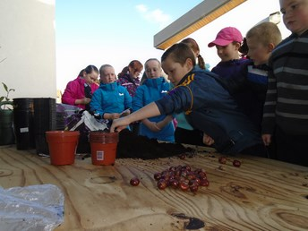 Science- Callum's conkers! (Will they grow) (Copy)